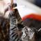 Табак – помощник коронавируса